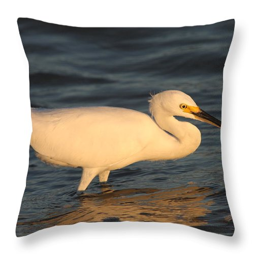 Egret Throw Pillow featuring the photograph Snowy Egret By Sunset by Christiane Schulze Art And Photography