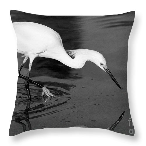 Egret Throw Pillow featuring the photograph Snowy Egret Fishing by John Harmon