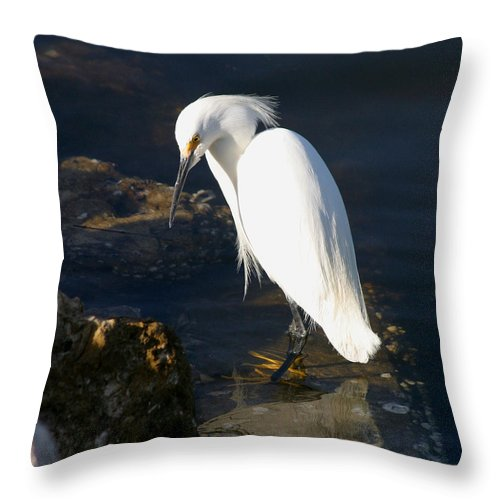 Snowy Egret Throw Pillow featuring the photograph Snowy Egret by Joseph G Holland