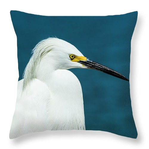 Aquatic Throw Pillow featuring the mixed media Snowy Egret Portrait by Stefano Senise