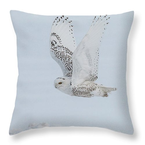 White Throw Pillow featuring the photograph Snowy Owl #3 by Patti Deters