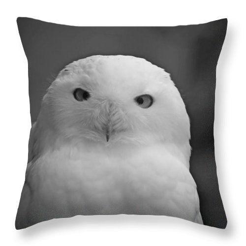 Birds Throw Pillow featuring the photograph Snowy Owl by Phill Doherty