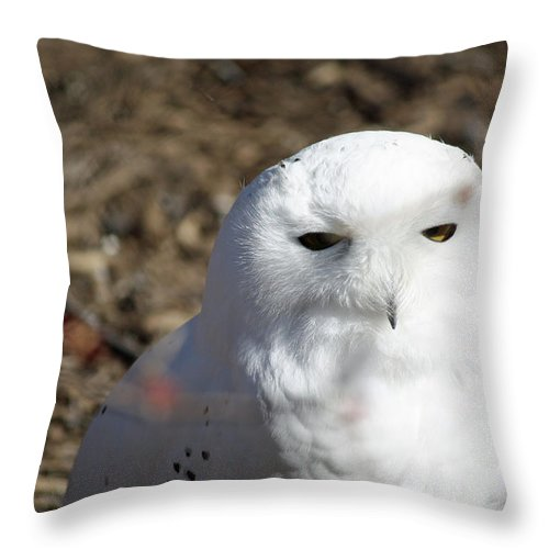 Maryland Throw Pillow featuring the photograph Snowy Owl by Ronald Reid