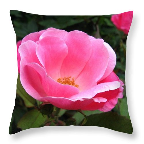 Flower Throw Pillow featuring the photograph So Pretty by Rhonda Barrett