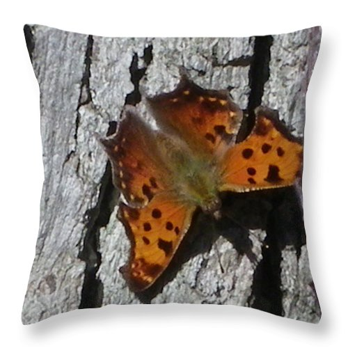 Moth Throw Pillow featuring the photograph Soakin Up The Autumn Sun by Peggy King