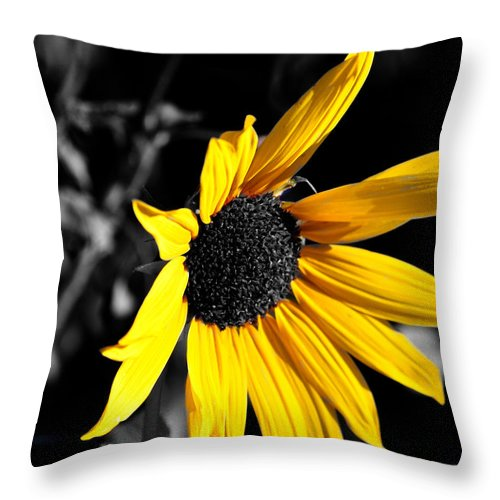 Clay Throw Pillow featuring the photograph Soaking Up The Yellow Sunshine by Clayton Bruster
