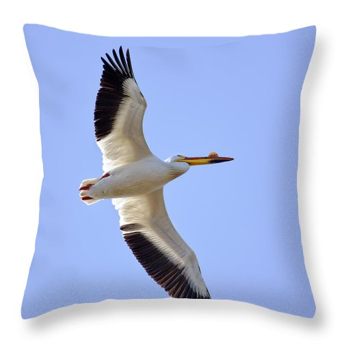 American White Pelican Throw Pillow featuring the photograph Soaring American White Pelican by Al Mueller