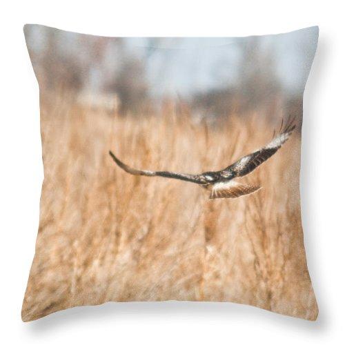Hawk Throw Pillow featuring the photograph Soaring Hawk Over Field by Douglas Barnett