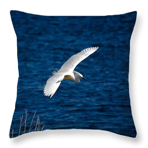 Bird Throw Pillow featuring the digital art Soaring Snowy Egret by DigiArt Diaries by Vicky B Fuller