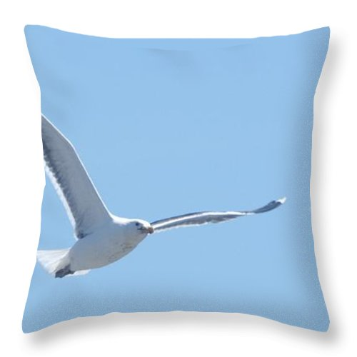 Seagull Throw Pillow featuring the photograph Soaring by Steven Natanson