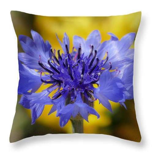 Nature Throw Pillow featuring the photograph Soft Bachelor Button by Laurel Powell