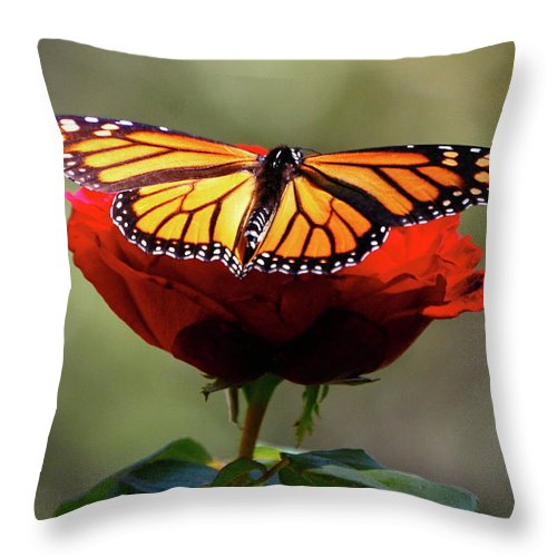 Monarch Butterfly Throw Pillow featuring the photograph Soft Landing by Debbie Karnes