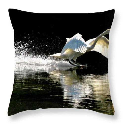Swan Throw Pillow featuring the photograph Soft Landing by Joe Ormonde