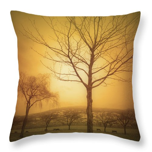 Trees Throw Pillow featuring the photograph Soft Light In Summerland by Tara Turner