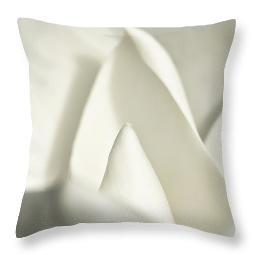 Magnolia Throw Pillow featuring the photograph Soft Magnolia by Christopher Holmes
