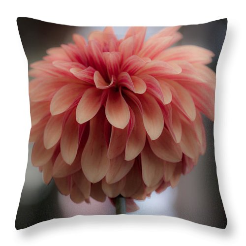 Flower Throw Pillow featuring the photograph Soft Pedals by Paul Slebodnick