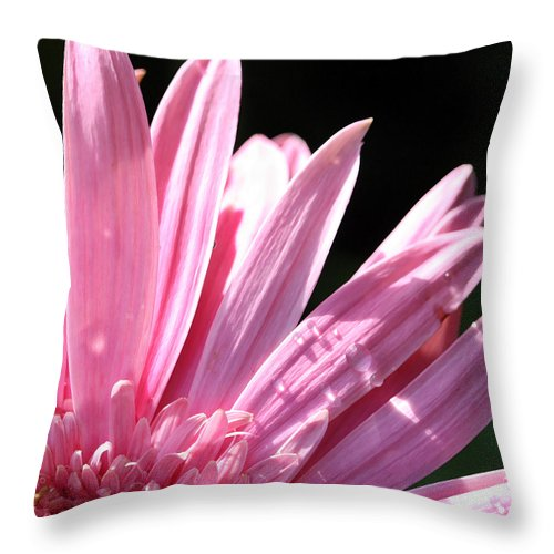 Daisy Throw Pillow featuring the photograph Soft Pink by Mary Haber