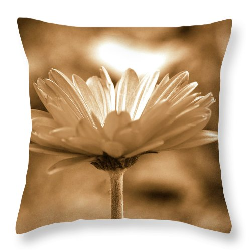 Daisy Throw Pillow featuring the photograph Some Shine by Lori Tambakis