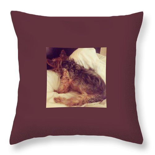 Cute Throw Pillow featuring the photograph Not Today by Kate Arsenault
