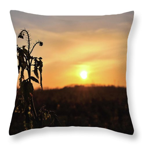 Sonnenuntergang Blume Flowwer Sky Himmel Throw Pillow featuring the photograph Sonnenuntergang by Scimitarable
