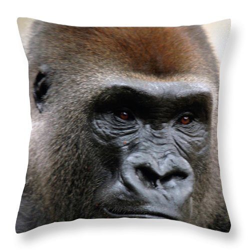 Africa Throw Pillow featuring the photograph Sorrow by Alan Look
