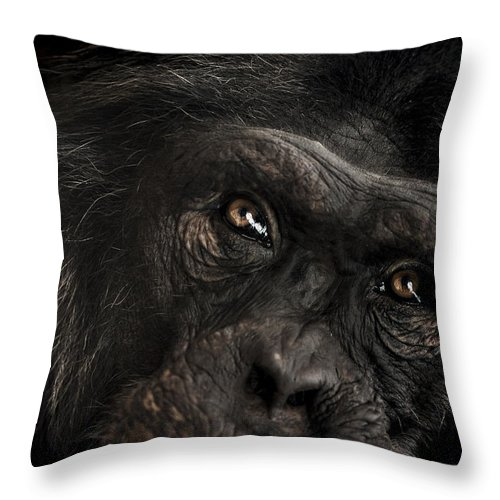 Chimpanzee Throw Pillow featuring the photograph Sorrow by Paul Neville