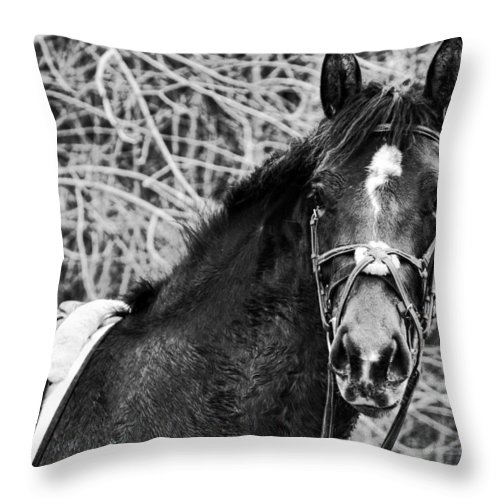 Horse Throw Pillow featuring the photograph Soul Mate by Traci Cottingham