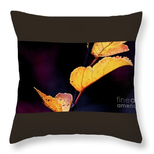 Leaves Throw Pillow featuring the photograph Souls Approach by Linda Shafer