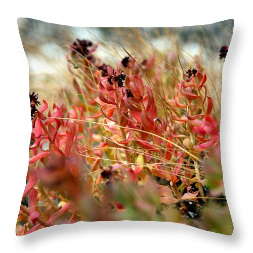 Throw Pillow featuring the photograph South Lake Beauties by Chris Brannen