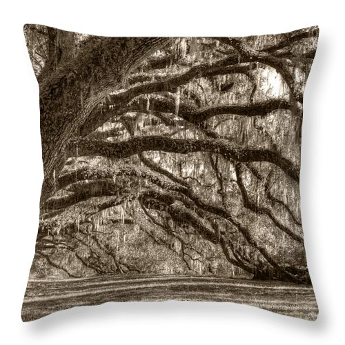 Live Oak Throw Pillow featuring the photograph Southern Live Oak Trees by Dustin K Ryan