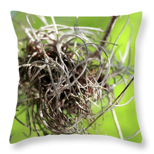 Trees Throw Pillow featuring the photograph Spanish Moss II by Mary Haber