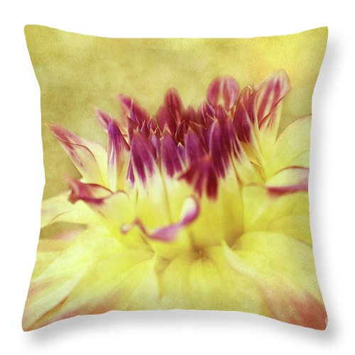 Dahlias Throw Pillow featuring the photograph Sparkling Dahlia by Beve Brown-Clark Photography