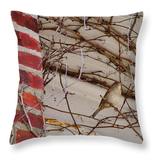 Sparrow Throw Pillow featuring the photograph Sparrow by JAMART Photography
