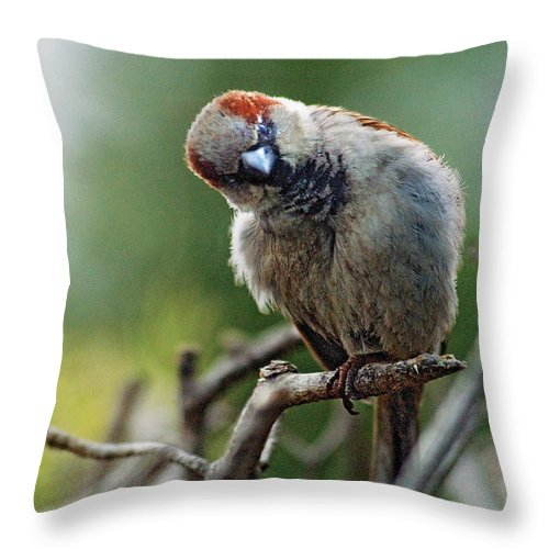 Humor Throw Pillow featuring the photograph Sparrow Puzzled At What It Sees by Steve Somerville