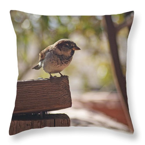 Sparrow Throw Pillow featuring the photograph Sparrow. by Robert Rodda