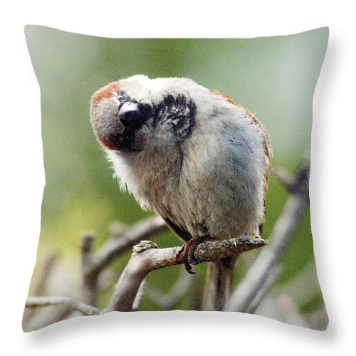 Bird Throw Pillow featuring the photograph Sparrow Tilts It Head by Steve Somerville