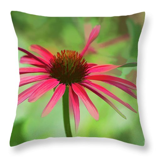 Cone Flower Throw Pillow featuring the photograph Spash Of Red by Susan Warren