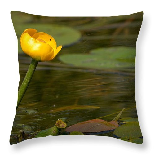 Lehtokukka Throw Pillow featuring the photograph Spatterdock by Jouko Lehto