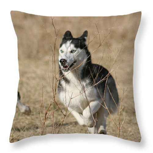 Animal Throw Pillow featuring the photograph Speed Freak by David Dunham