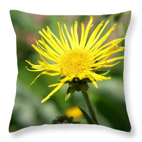 Daisy Throw Pillow featuring the photograph Spider Daisy by Christiane Schulze Art And Photography