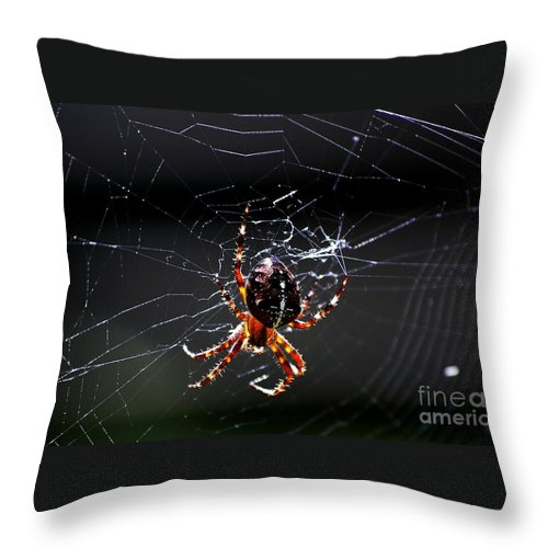Digital Photo Throw Pillow featuring the photograph Spider by David Lane