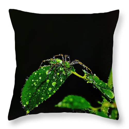 Clay Throw Pillow featuring the photograph Spider In The Shower by Clayton Bruster