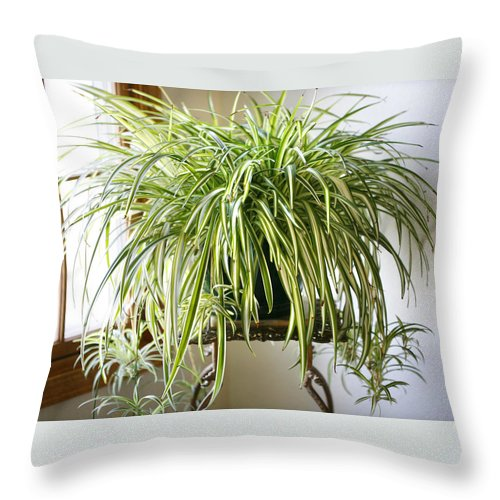 Spider Plant Throw Pillow featuring the photograph Spider Plant by Marilyn Hunt