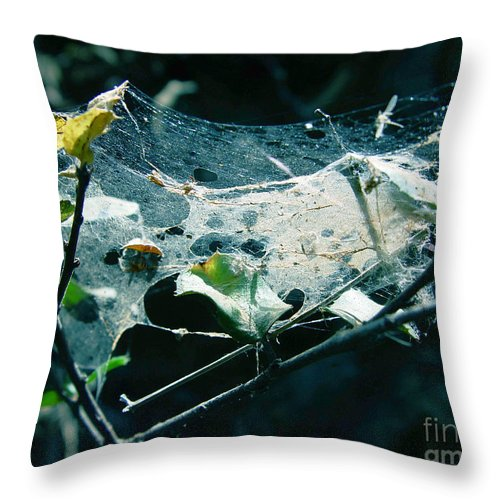 Spider Throw Pillow featuring the photograph Spider Web by Peter Piatt