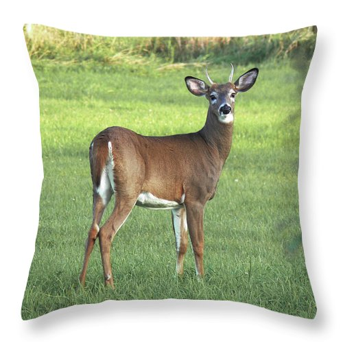Whitetail Buck Throw Pillow featuring the photograph Spikehorn Whitetail by Natalie LaRocque