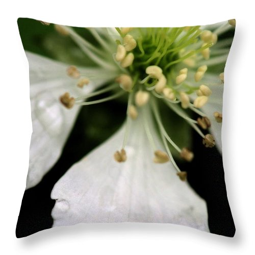 Flower Throw Pillow featuring the photograph Spindly Stamen by Angela Rath