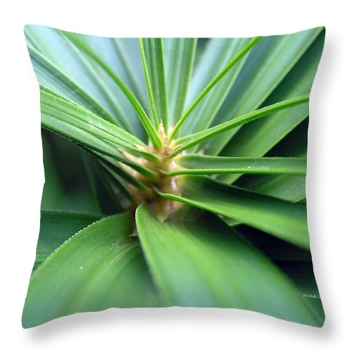 Plant Green Spiral Leaves Charleston Sc Dustin Throw Pillow featuring the photograph Spiral Leaves by Dustin K Ryan