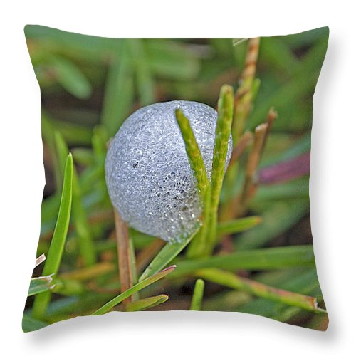 Insect Throw Pillow featuring the photograph Spittle Bug Case by Kenneth Albin