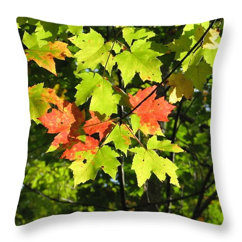 Fall Throw Pillow featuring the photograph Splattered Paint by Kelly Mezzapelle