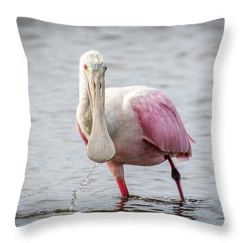 Roseate Spoonbill Throw Pillow featuring the photograph Spoonbill by Paul Freidlund